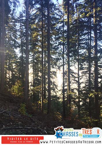 Eveil nature dans la forêt avec des enfants