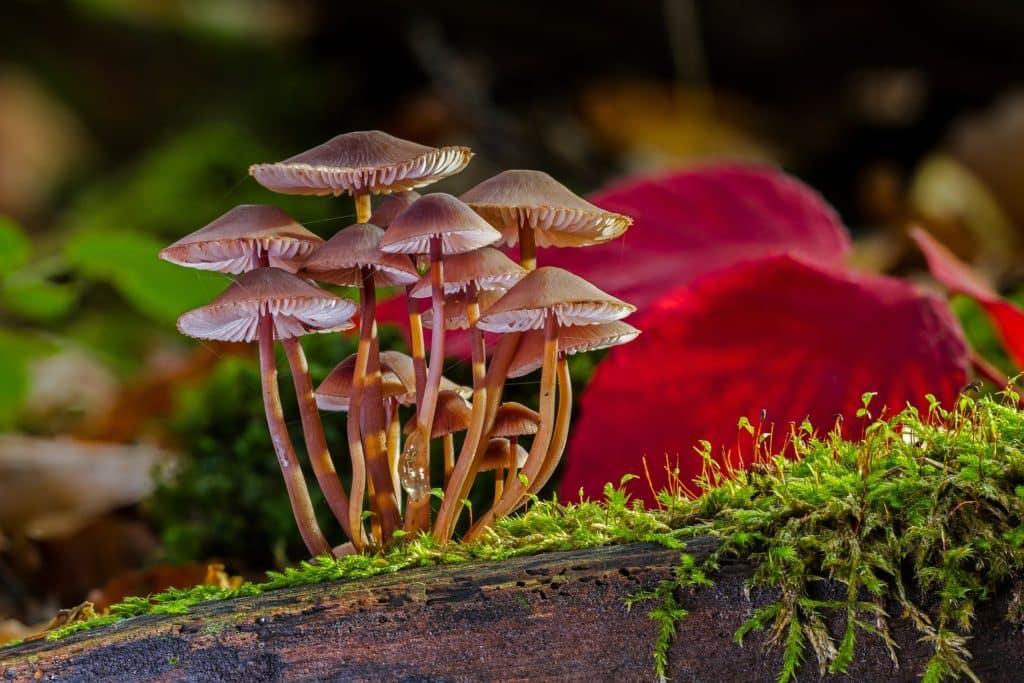 activité enfant automne champignons