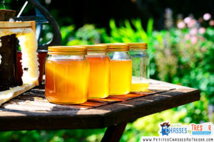 Le miel a une vertu cicatrisante
